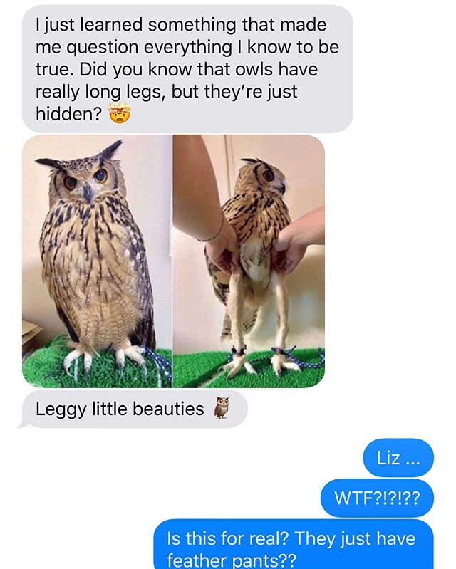 This text sums up for me in a nutshell why it seemed so necessary to start a podcast with @lizarch. #invaluableinformation #longleggedbeauty #featherpants #themoreyouknow #aboutowls