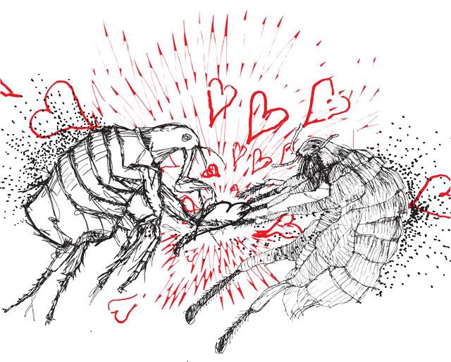 fleas-final-01.jpg