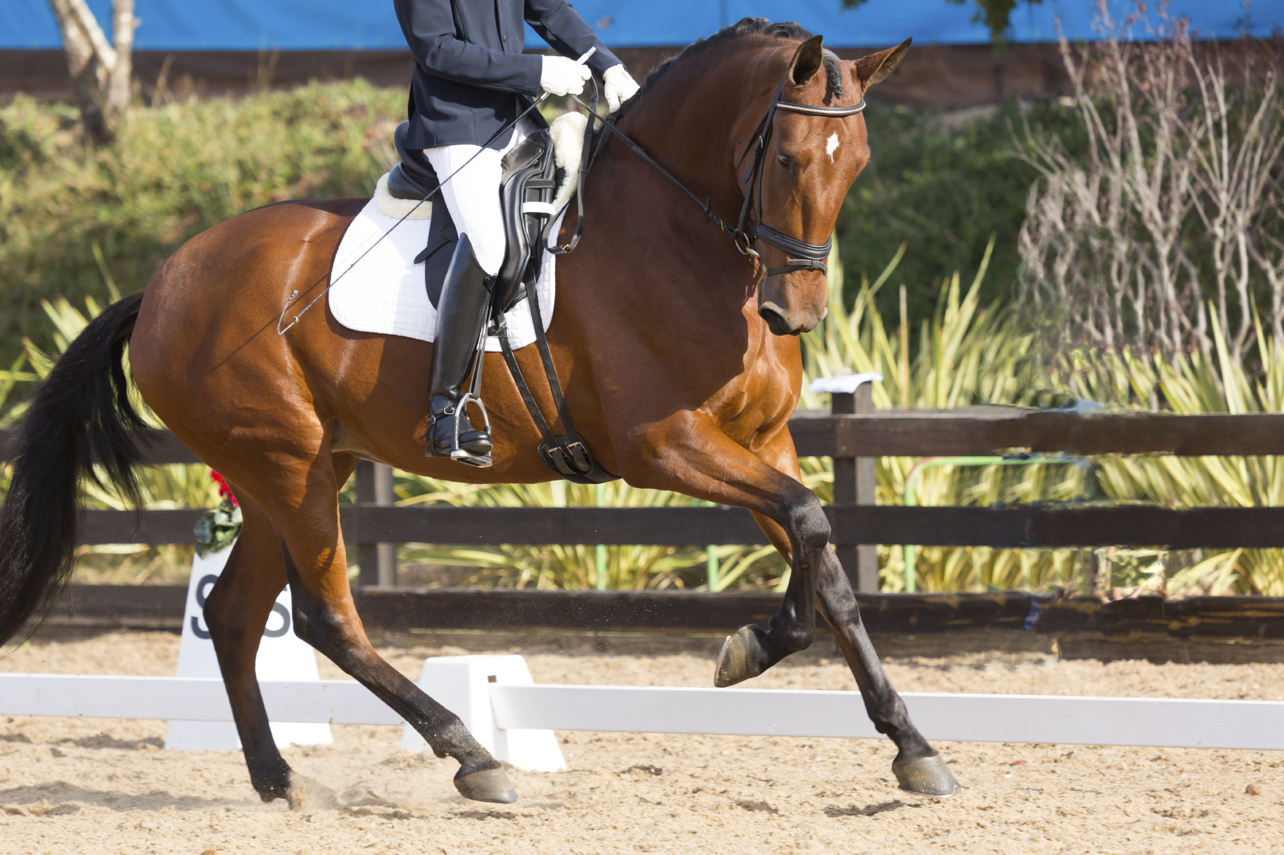 Dressage Classes and Clinics, Morphology Clinics — CavalReal