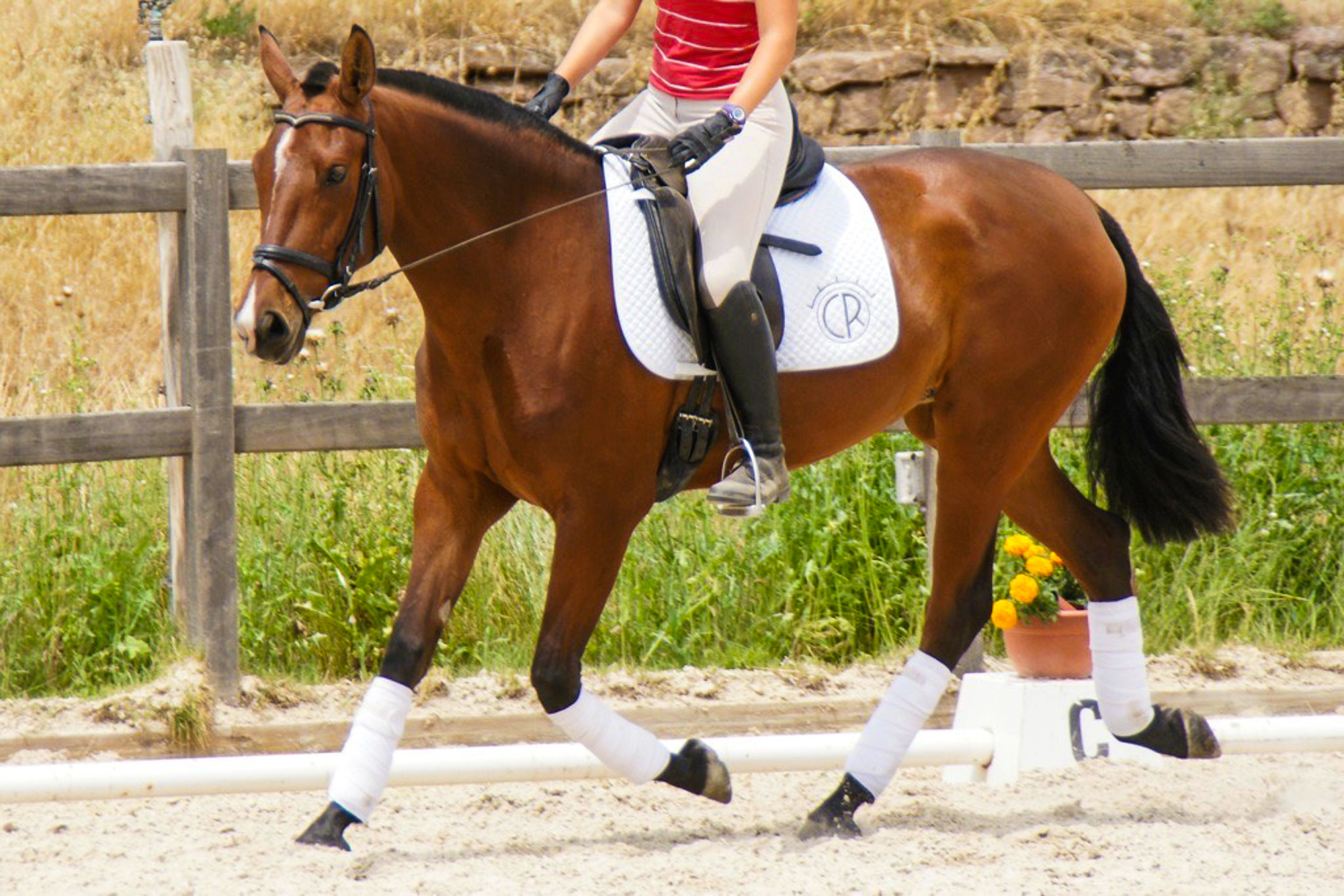 bay-PRE-andalusian-brood-mare-evaluation.jpg