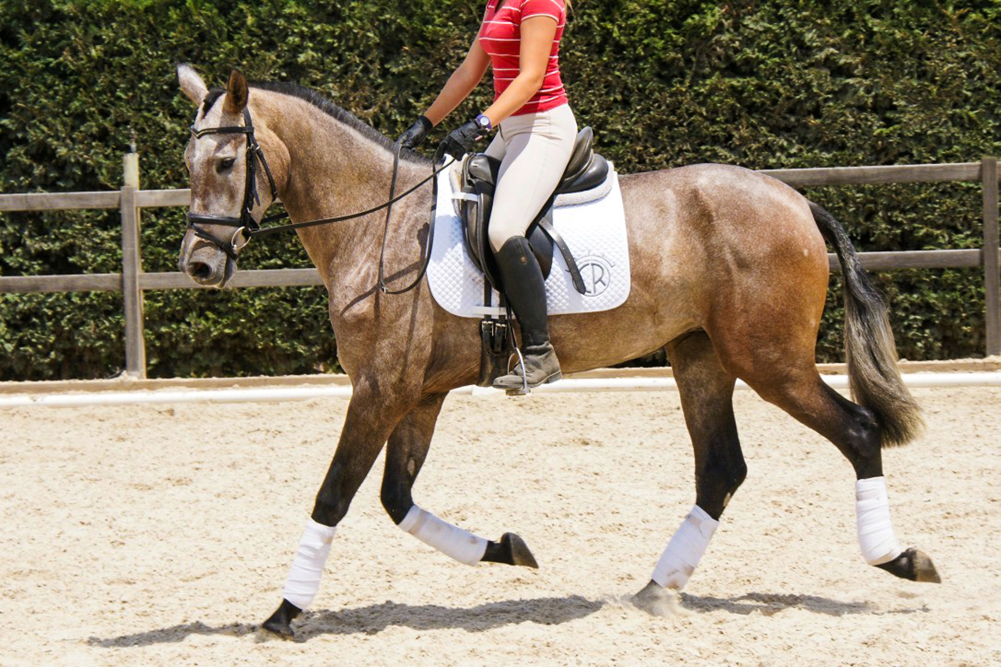 At 16.3hh / 170 cm, Hiedra VG is exceptionally tall for being a PRE