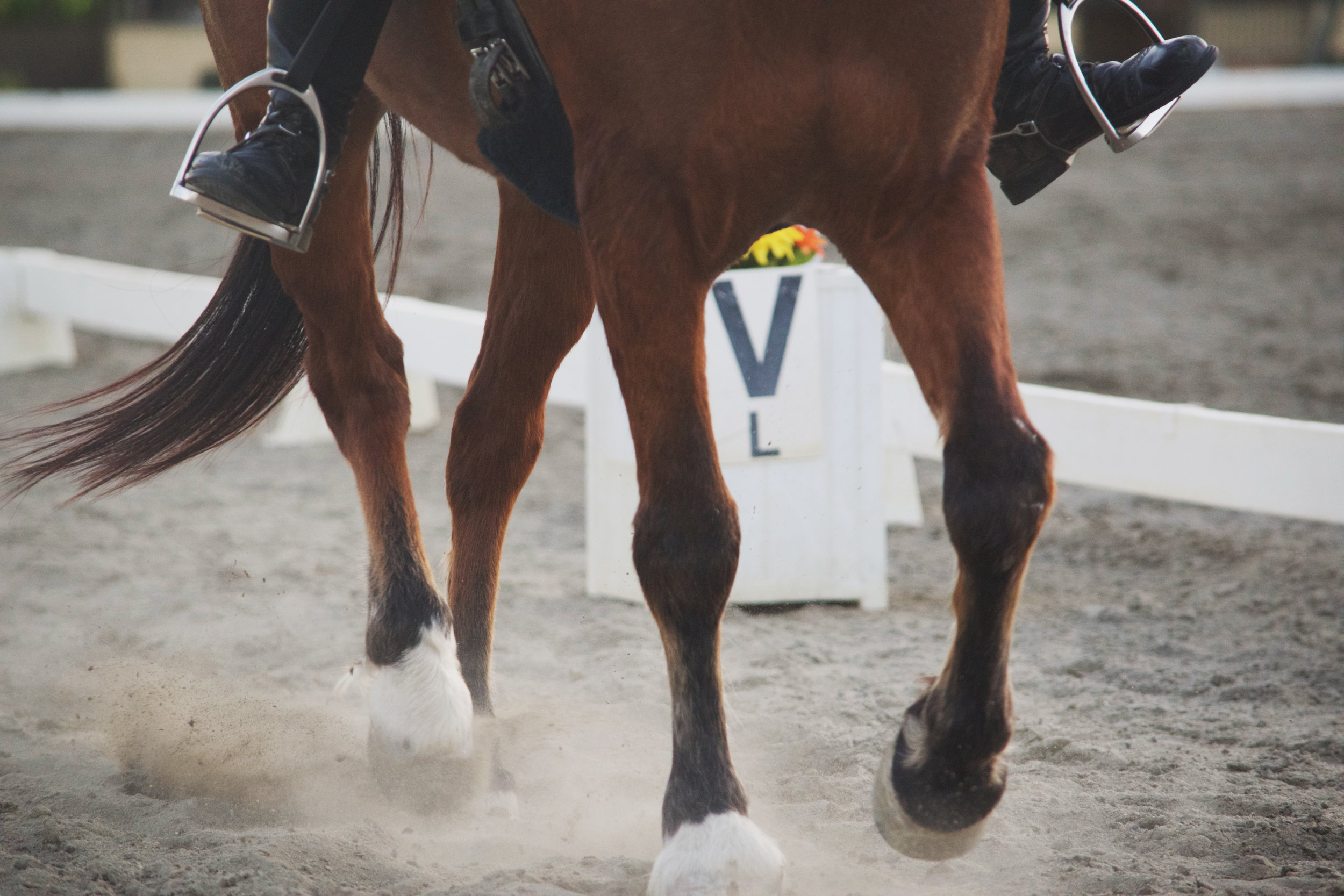 what-to-look-for-in-a-dressage-horse