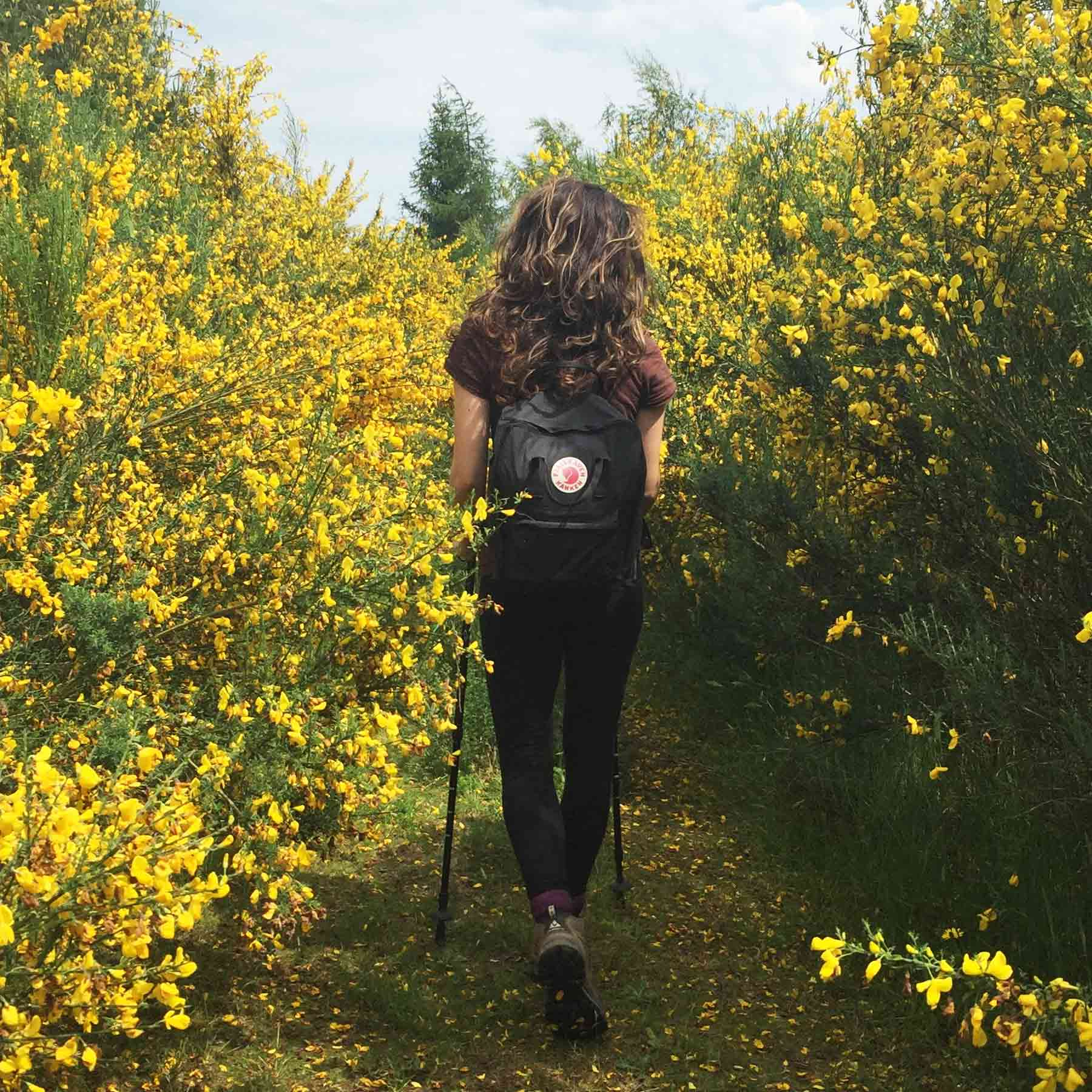 Even a brief stroll surrounded by nature can lower stress levels