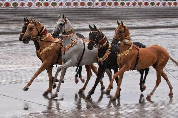 Akhal Tekes on parade in Turkmenistan