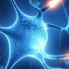 Neurologic Conditions - Regain strength and endurance while managing neurologic conditions such as:— Parkinson's disease— muscular dystrophy— stroke recovery— cerebral palsy