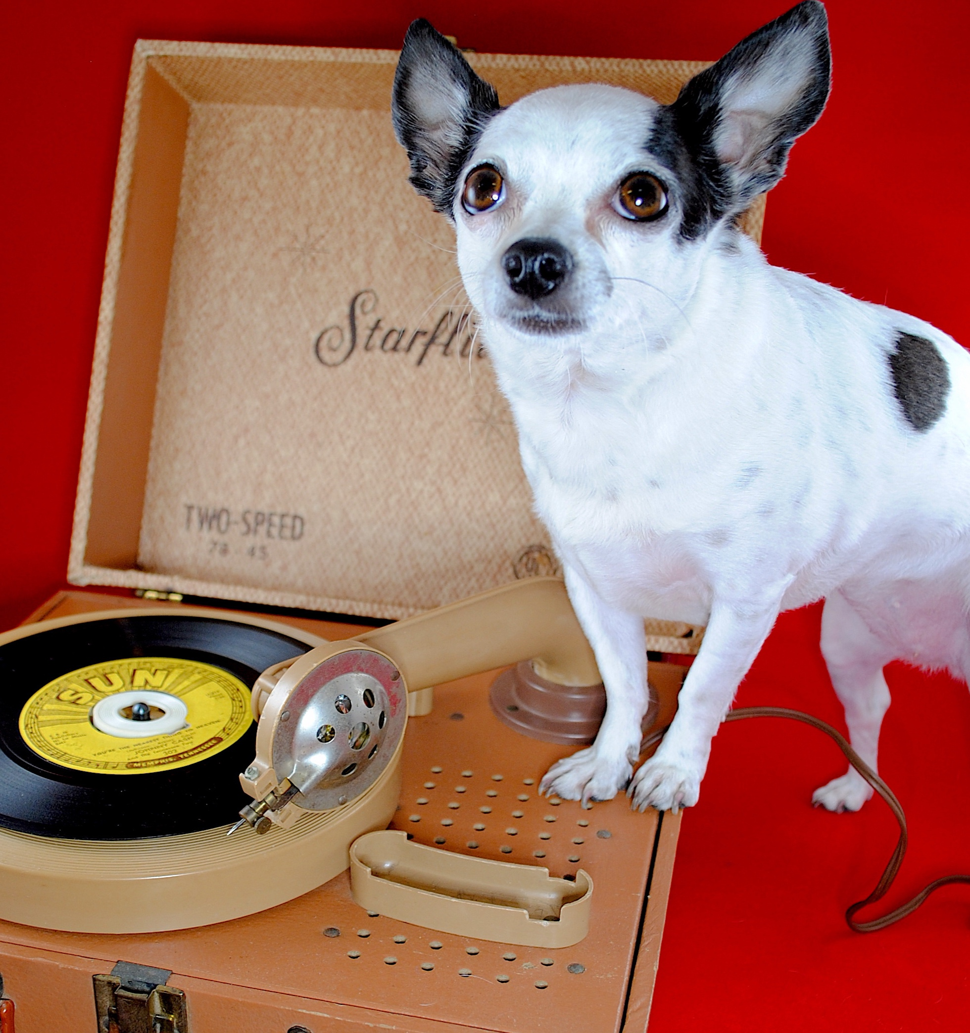 Vinyl Records for All - 113 Bradley Street, Carrollton, GA470-370-0963hello@carrolltonsquarerecords.com