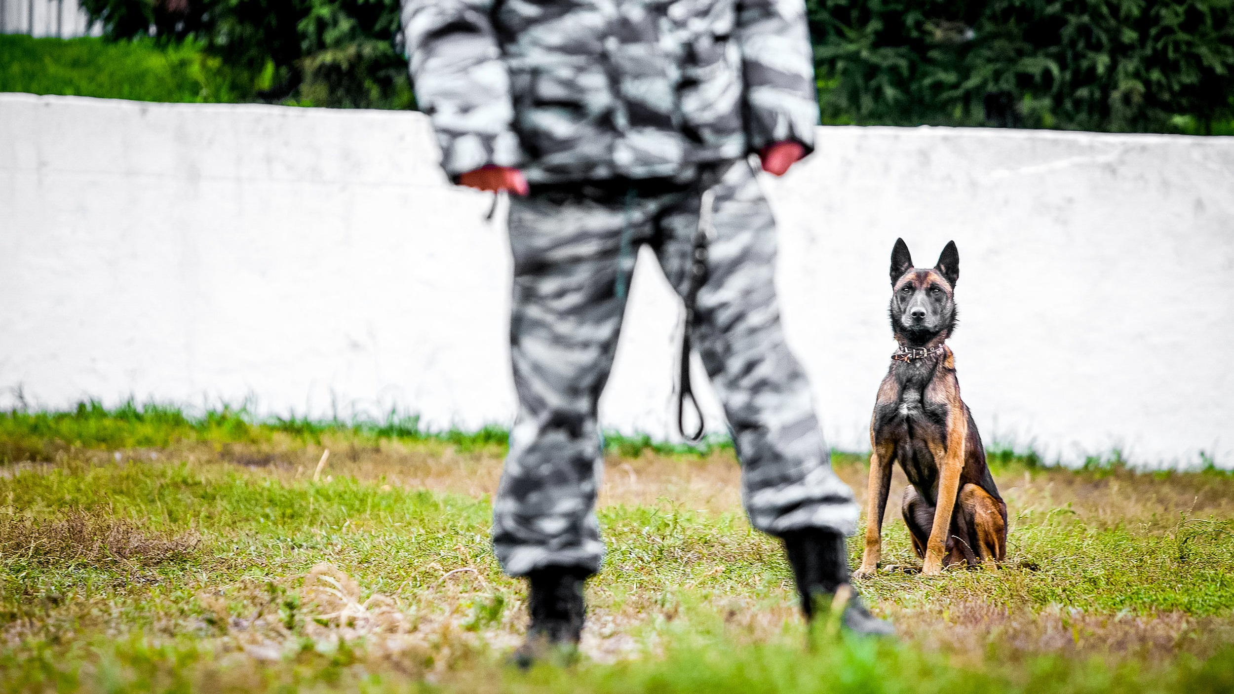 Free Services for Military & Police K-9s