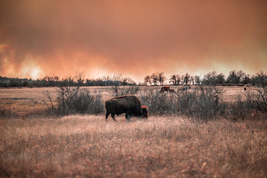 wichita-mountains-wildlife-refuge-fb_orig.jpg