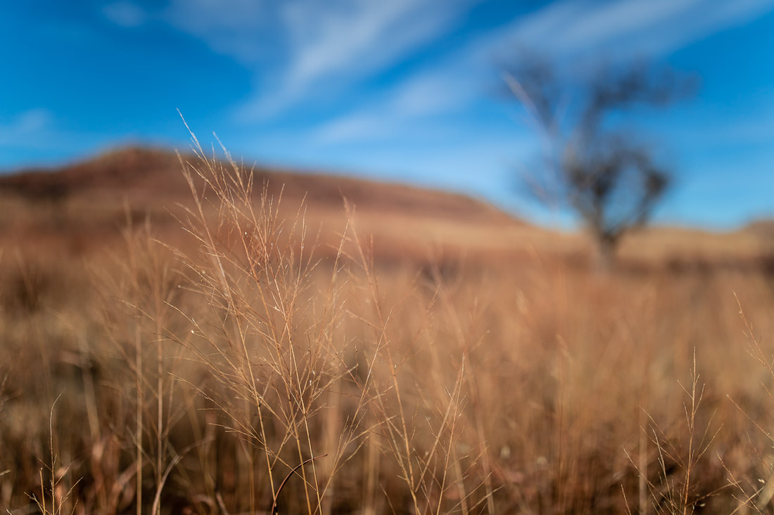 wichita-mountains-wildlife-refuge-ok-2197_orig.jpg