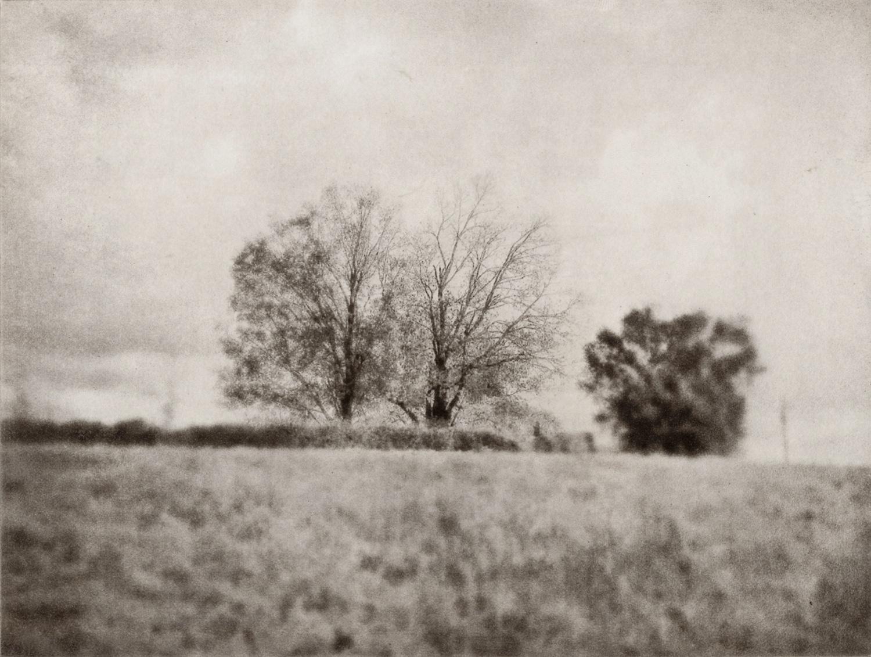 I81, Verona, Virginia – Trees | 8 x 6 inches | 2017