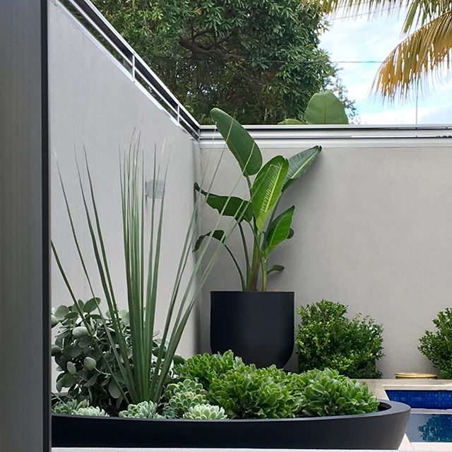 Just finished installing this garden design for the loveliest clients. It's so good to work with nice people. #landscapedesign #gardendesign #aildm #sydney #southhousegardens #sansouci #alpine_nurseries #thebalconygarden
