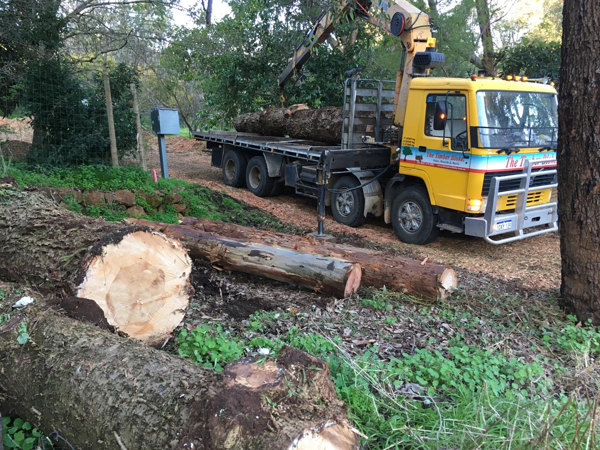 Salvage - Salvaged logs amount to about 80% of our logs. If you have a log, let us know.
