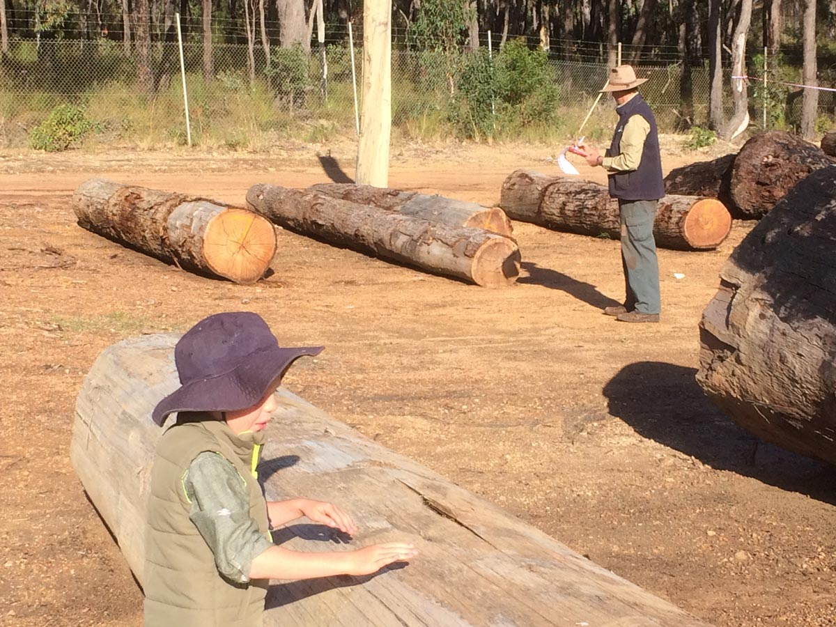 Auction - Most of our Sheoak comes from Government auctions. About 5% of our logs.