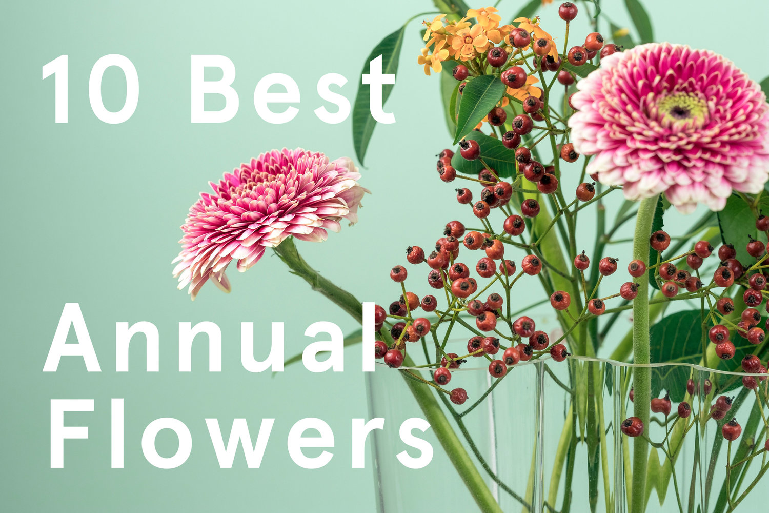 best annual flowers.jpg