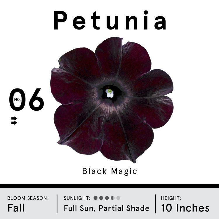 petunia.jpg