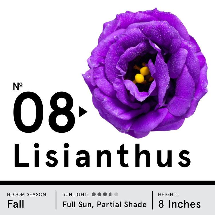lisianthus.jpg