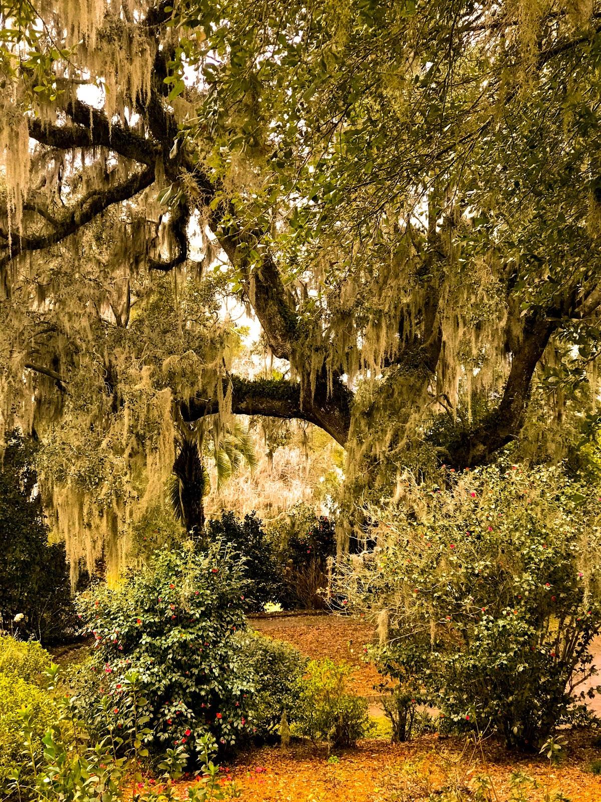 Mepkin Trees.jpg