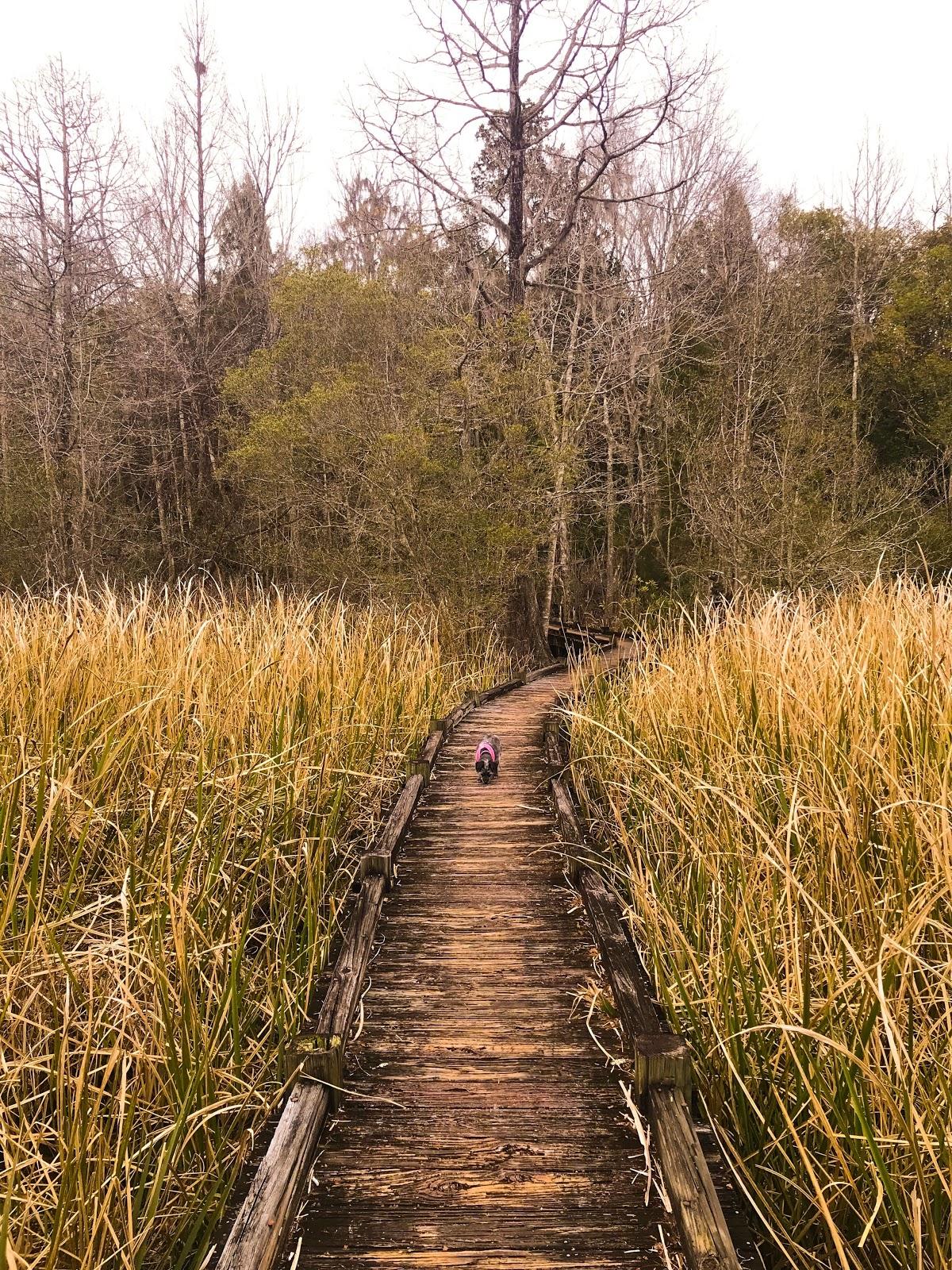 Santee Canal Path.jpg