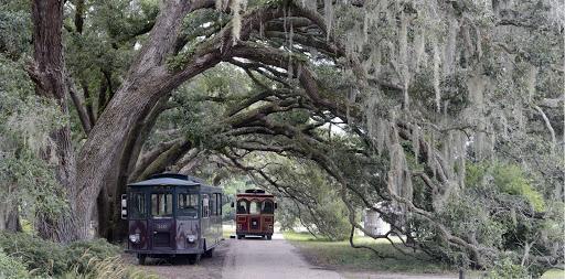 Charleston Tea.jpg