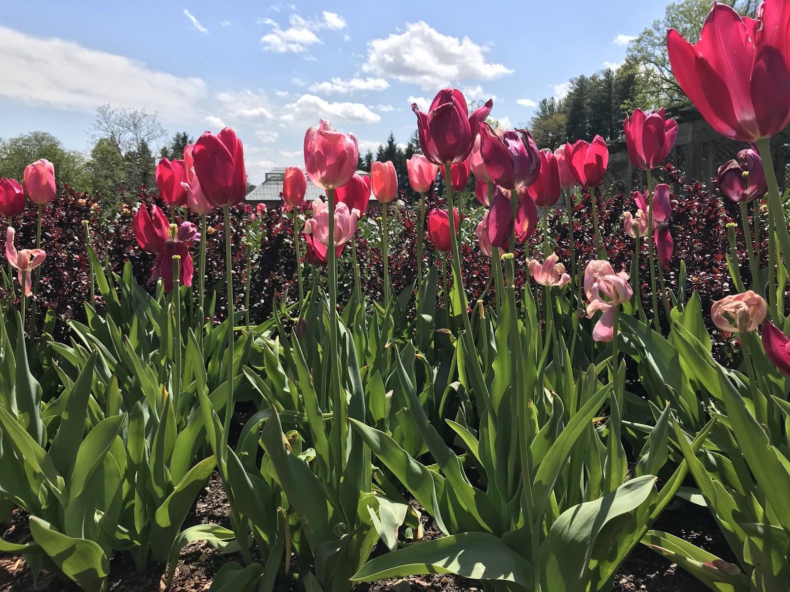 Biltmore Flowers.jpg