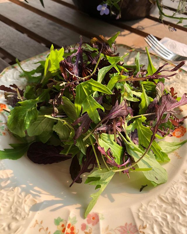 Salad season has officially arrived with freshly cut spicy mix and arugula from The New Farm. Try it with our very own Garlic Scape Vinaigrette. #farmtotable #local #organic