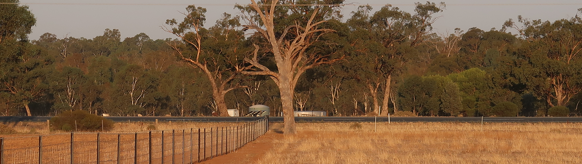 Front paddock, looking east towards the Cobb Hwy.   March 2019