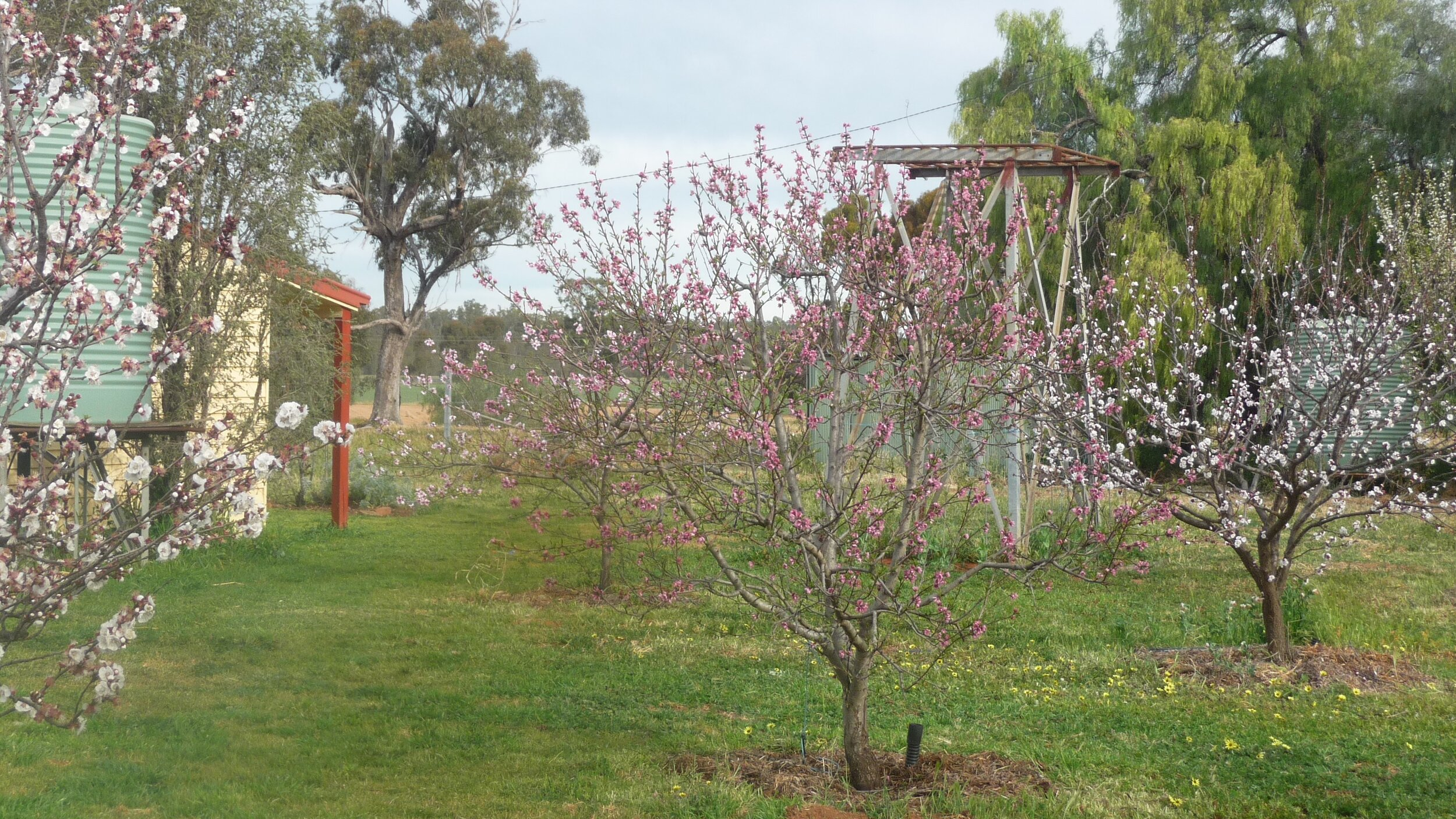 The Monastery orchard in springtime