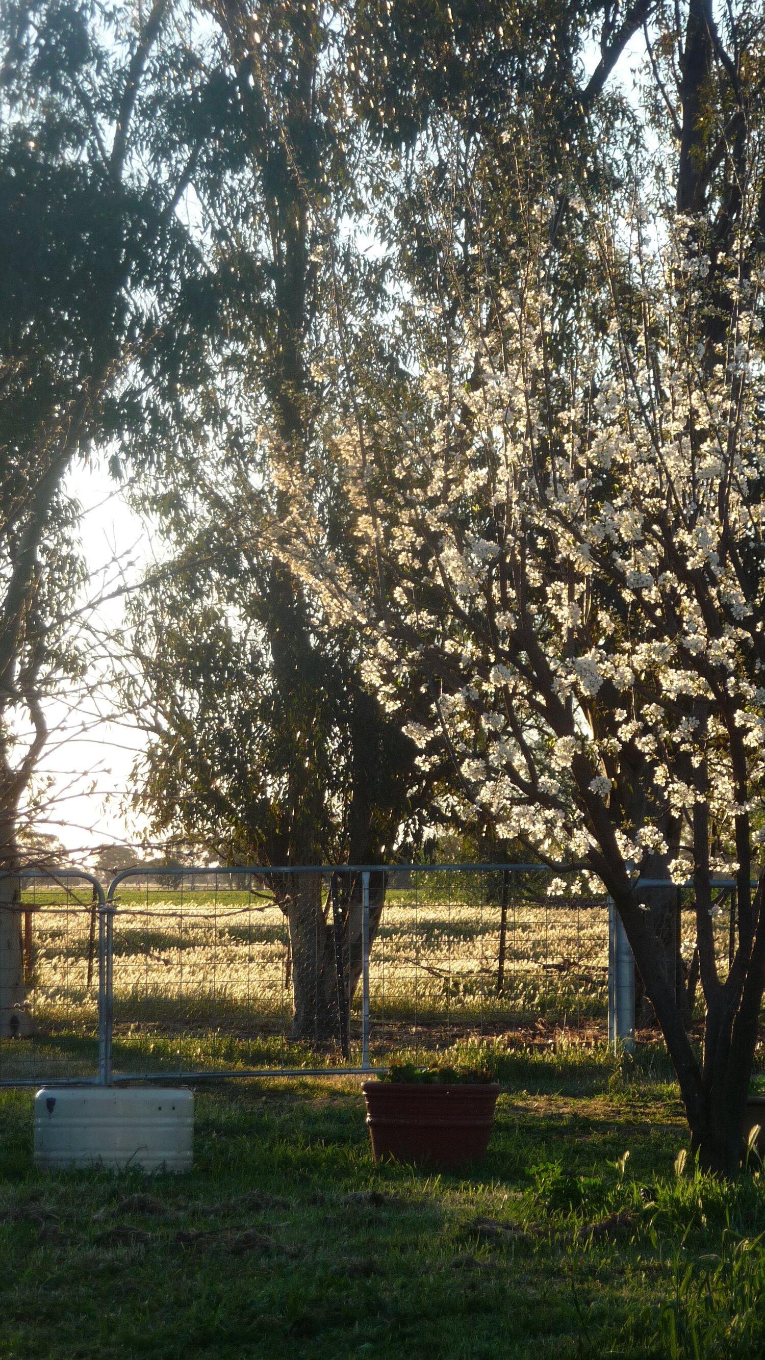 The Monastery garden in springtime.