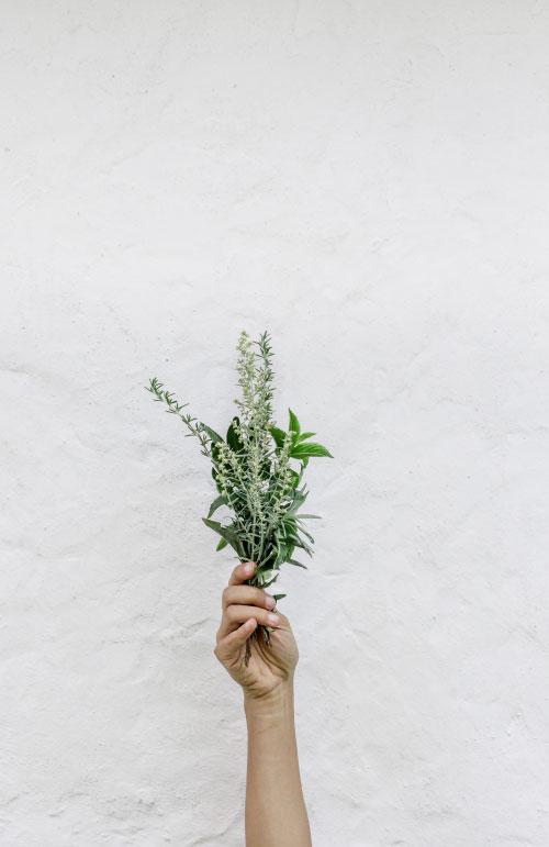 holding-herbs.jpg