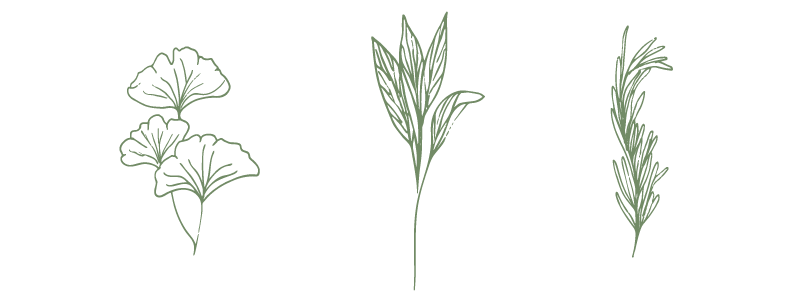 hand-sketched-herbs.png