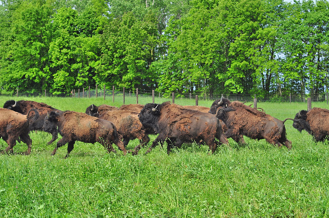 Running to a new pasture