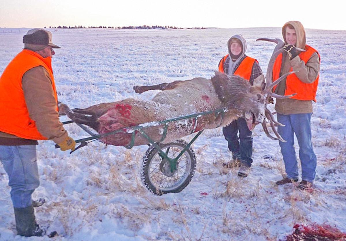 6x7 Bull Elk