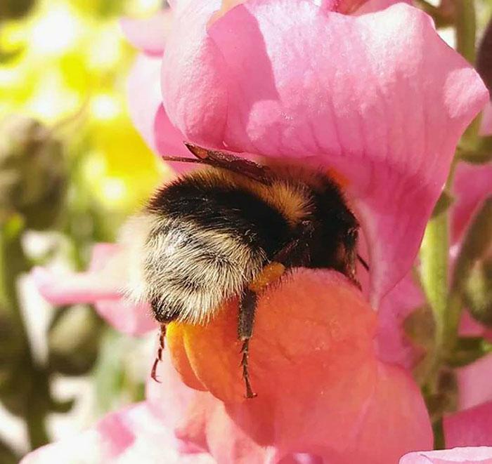 cute-bumblebee-butts-5-5af05f9cd601f__700.jpg
