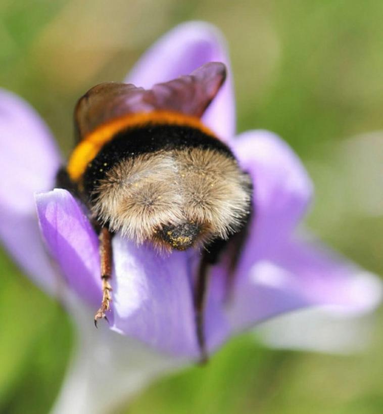cute-bumblebee-butt-4.jpg