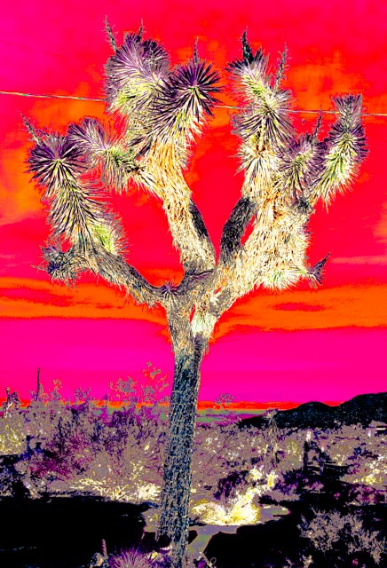 Joshua Tree: Red