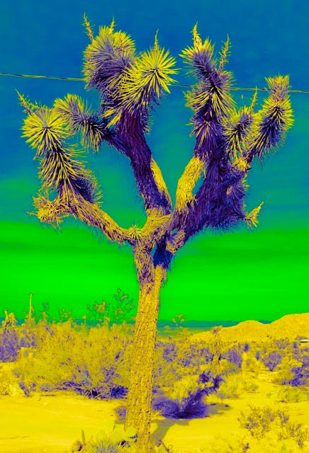 Joshua Tree: Green
