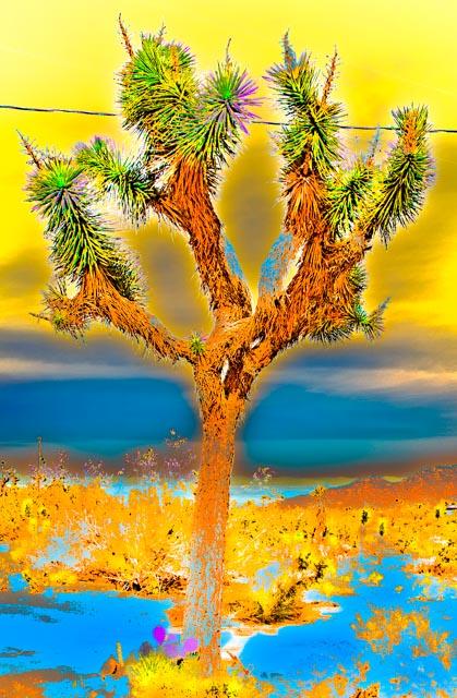 Joshua Tree: Blue/Brown/Yellow