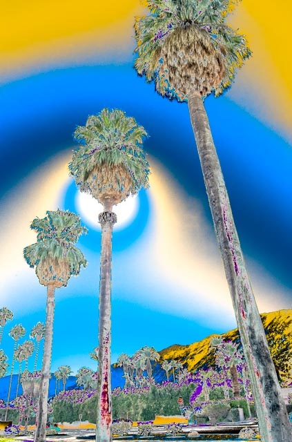 Desert: Palms with Colored Halos