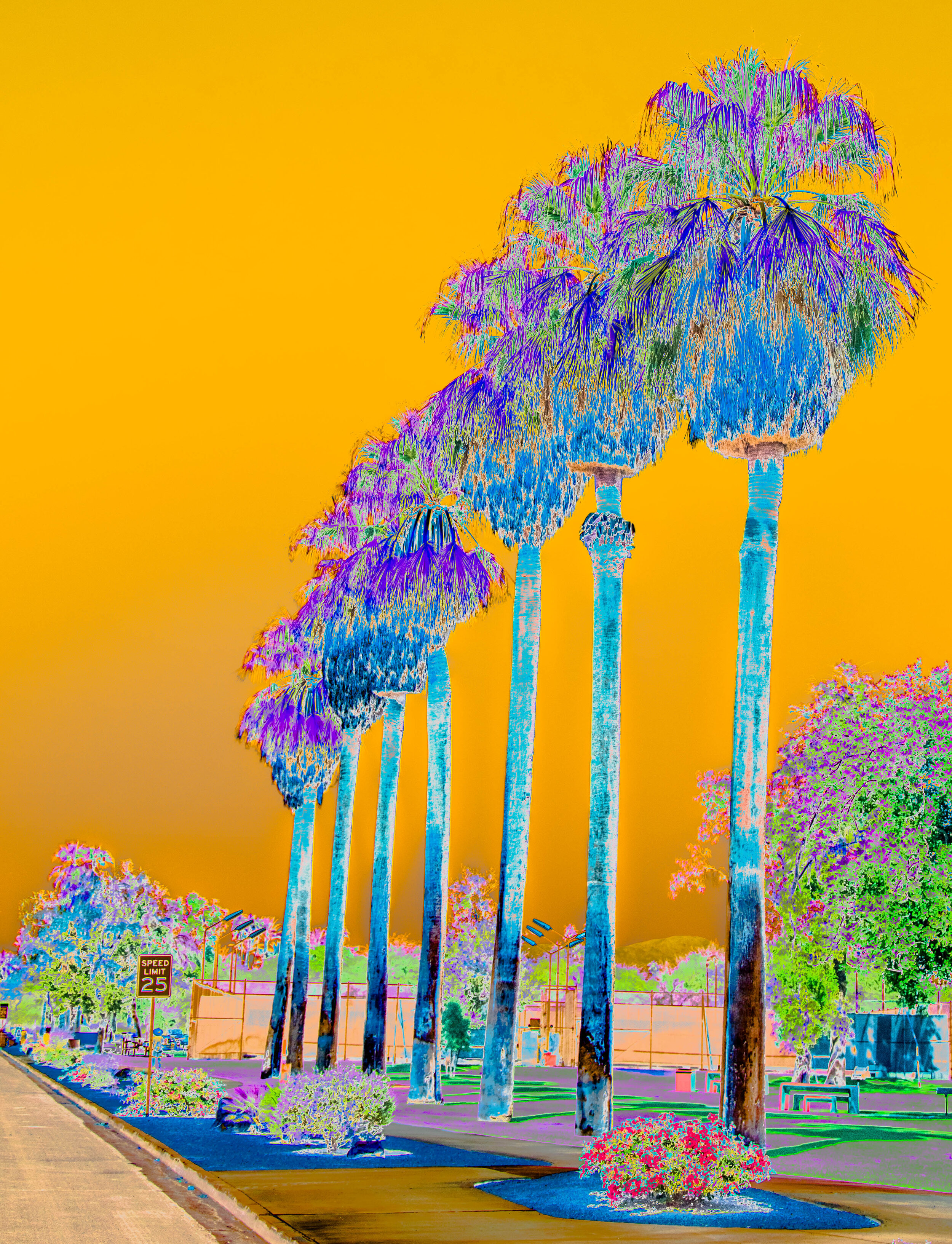 Eight Palms