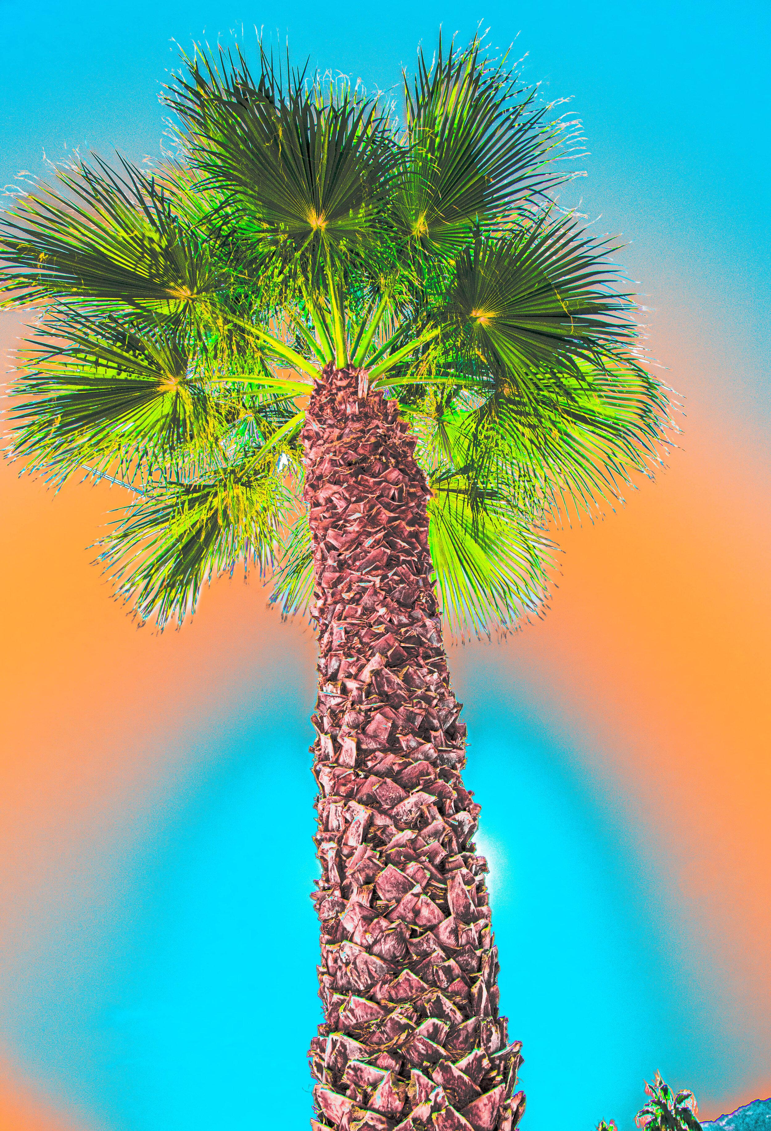Tall Palm Orange/Blue Sky