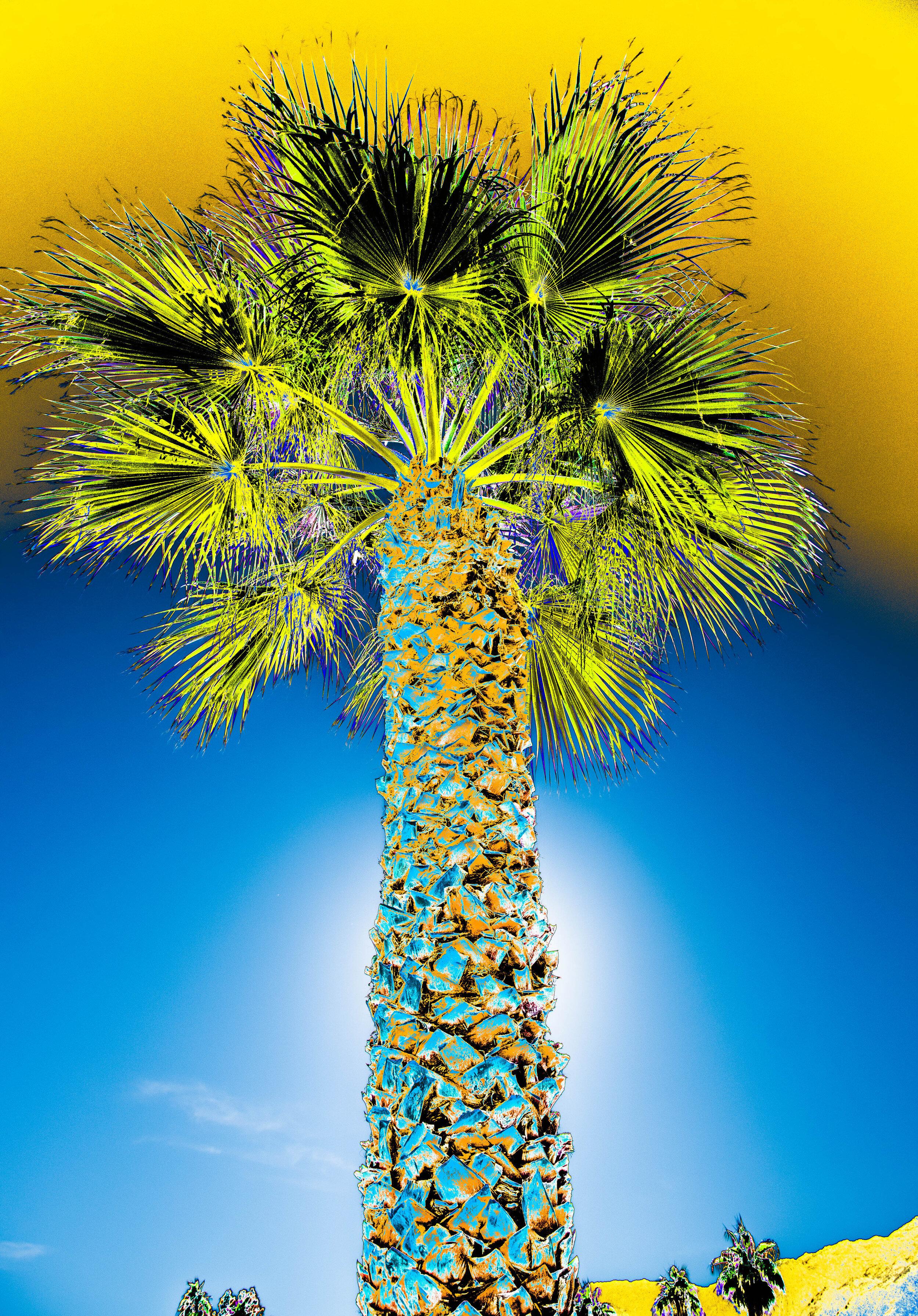 Tall Palm Yellow/Blue Sky