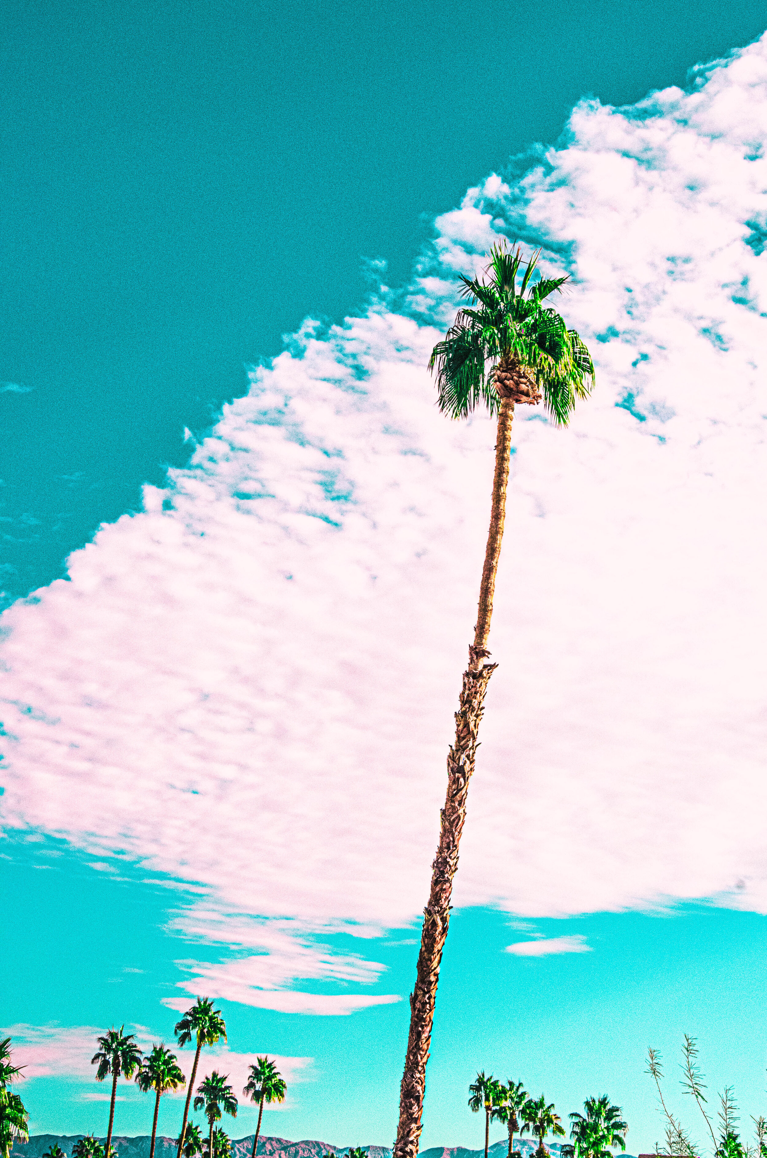 Lone Palm with Pink Cloud