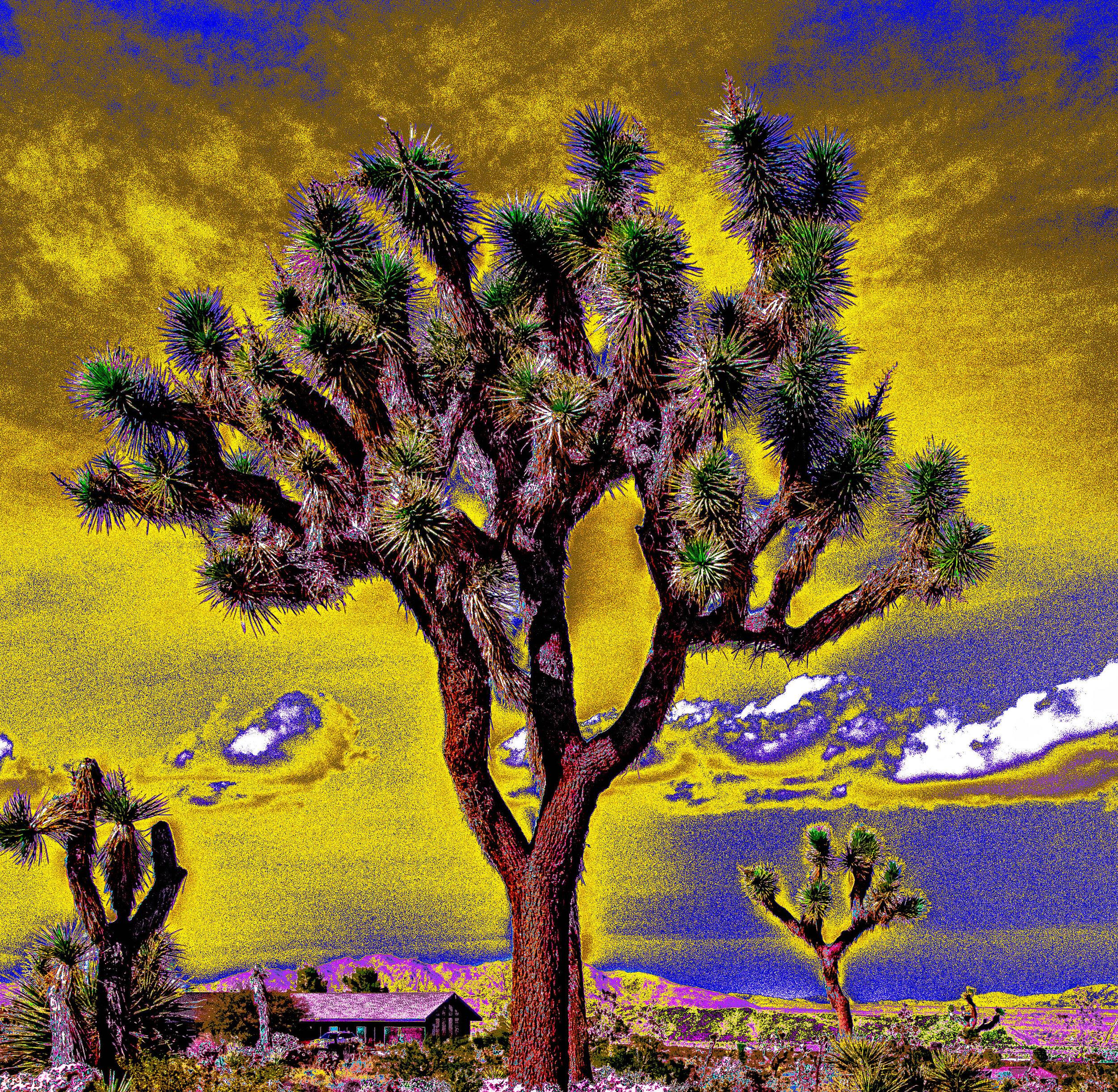 Joshua Tree Storm Clouds 2 YellowSky
