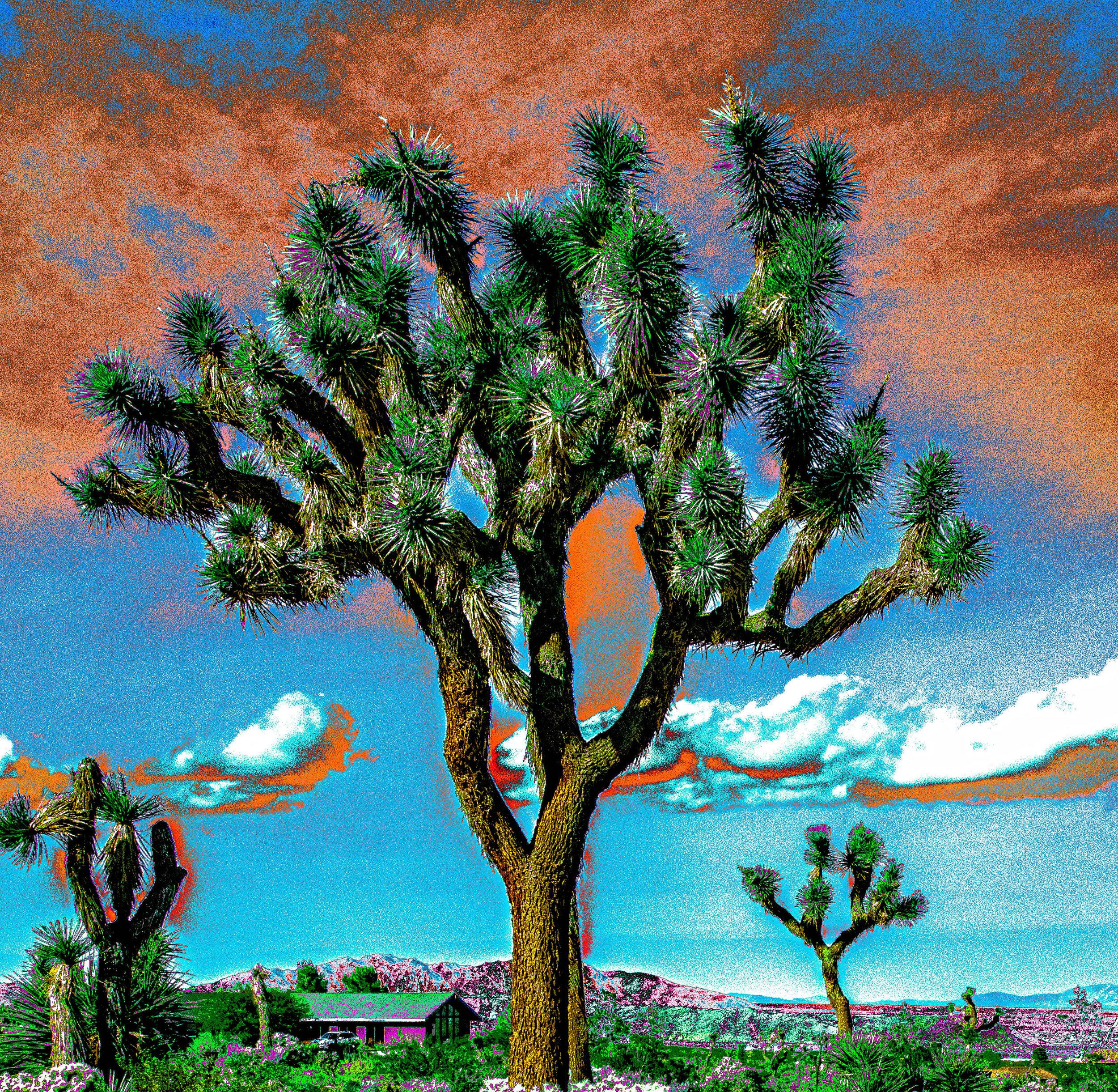 Joshua Tree Storm Clouds 3  Blue/Orange Sky