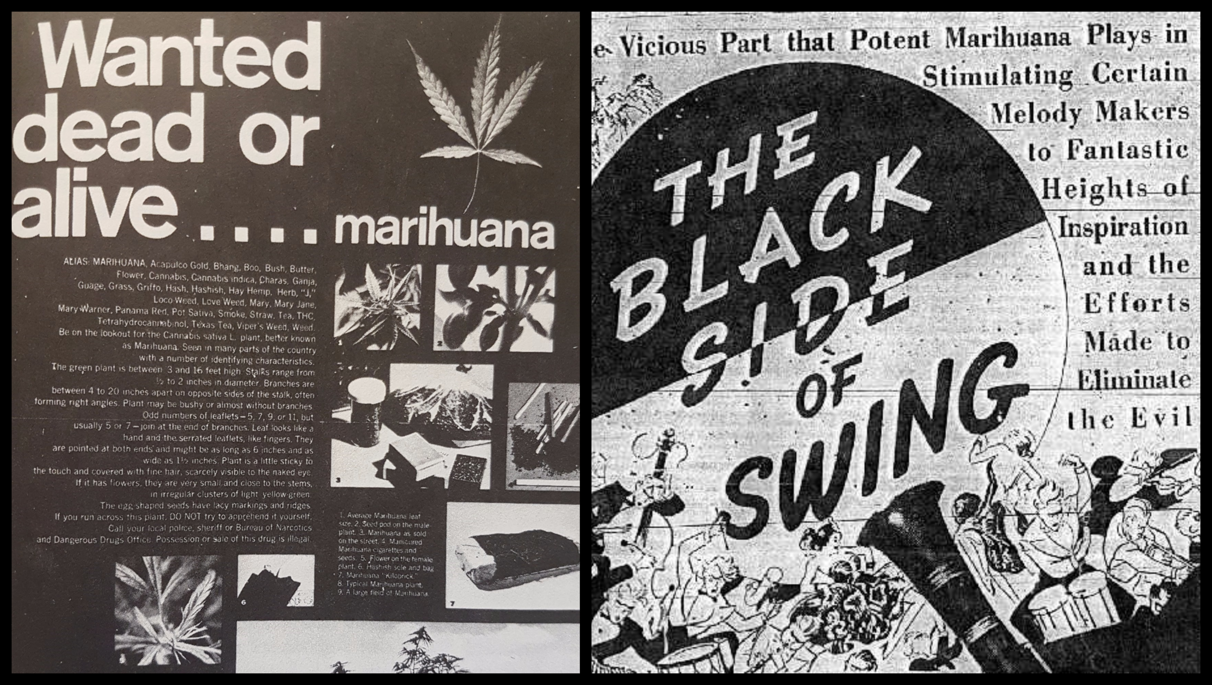 ReeferCollage5 (1).png