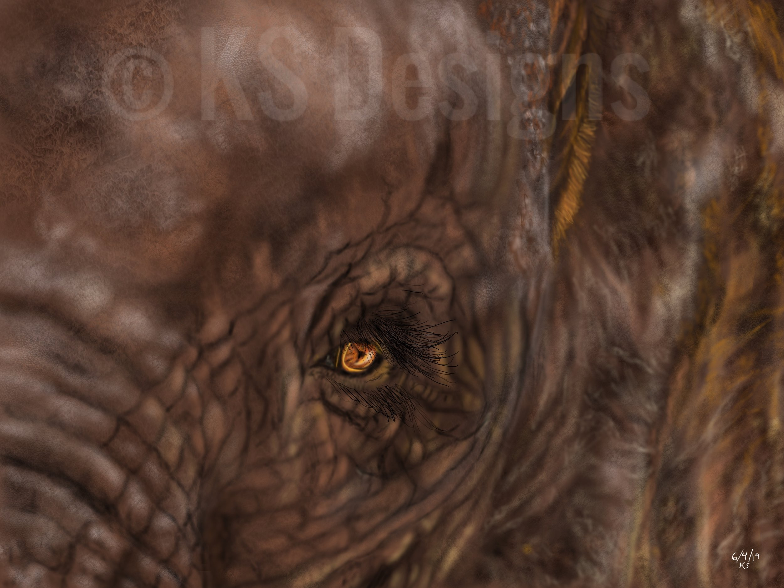 Looking Into The Soul Of A Mighty Elephant.jpg
