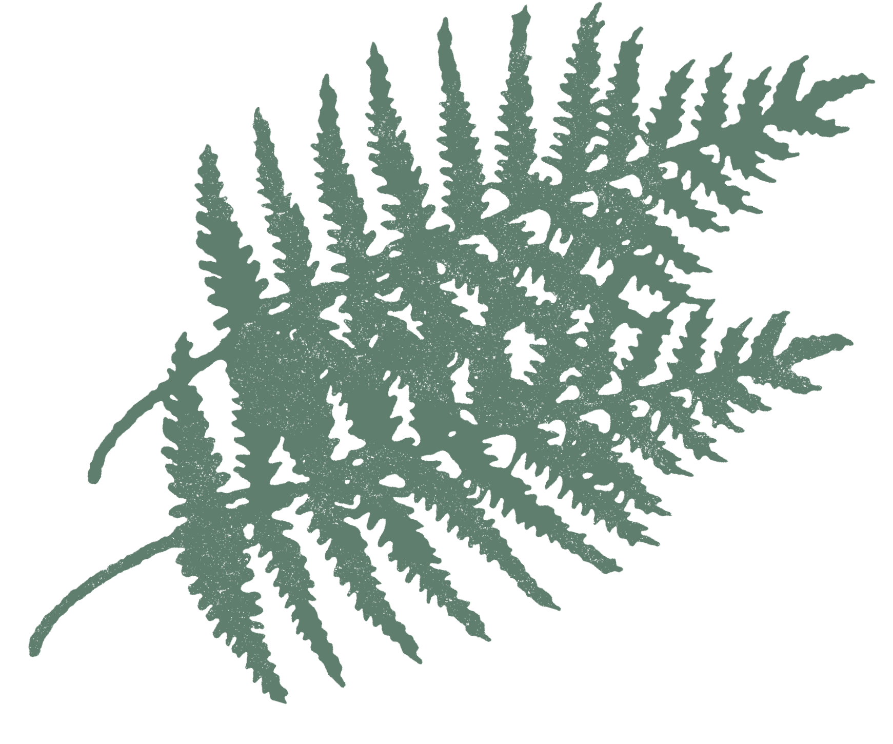 fern-vibes.png