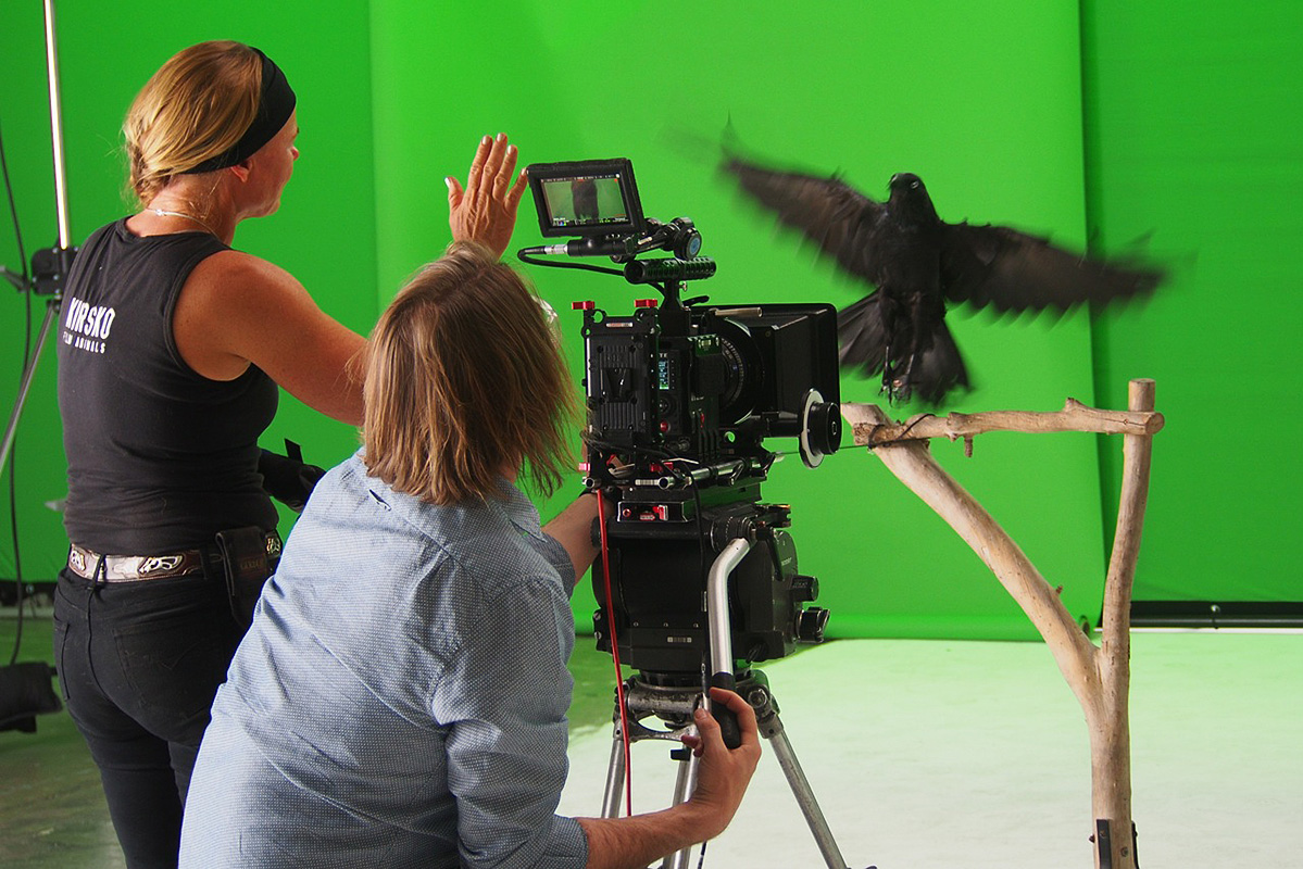 Kirsko Film Animals Kirstin Feddersen and Australian Raven On Set 800pxh.jpg