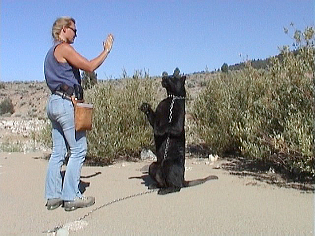 Kirsko Film Animals Kirstin Feddersen and Black Leopard.jpg