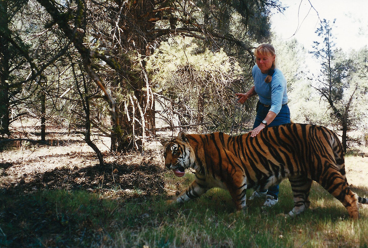 Kirsko Film Animals Kirstin Feddersen and Tiger 800pxh.jpg